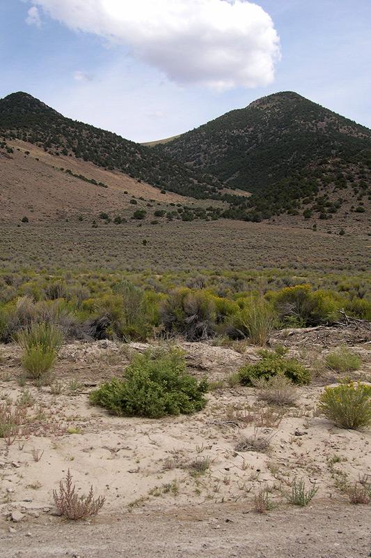 Pequop Range, Elko county, Nevada