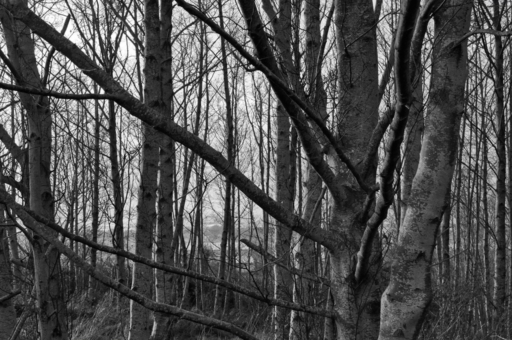 Trees, north end of Gold Beach, OR, Andrew D. Barron ©12/14/10