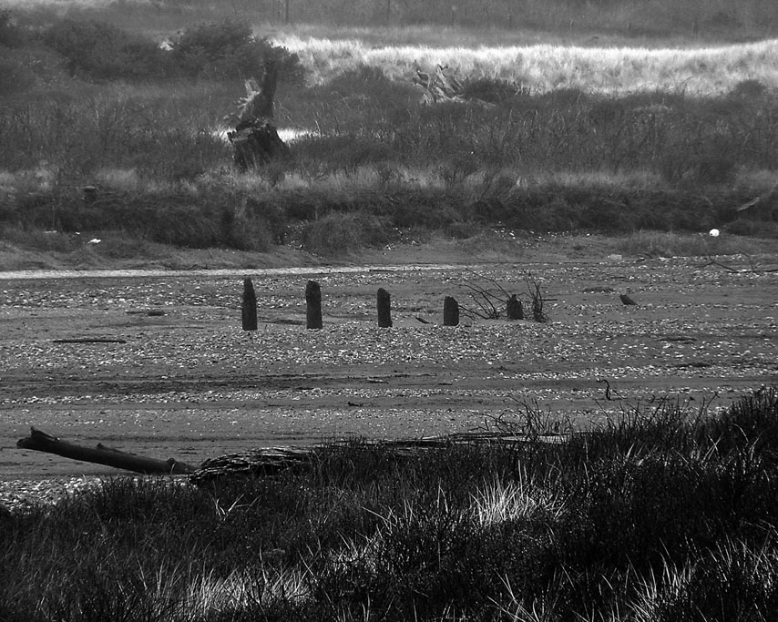 Euchre Creek marsh, Ophir, Curry County, OR, Andrew D. Barron ©1/12/11