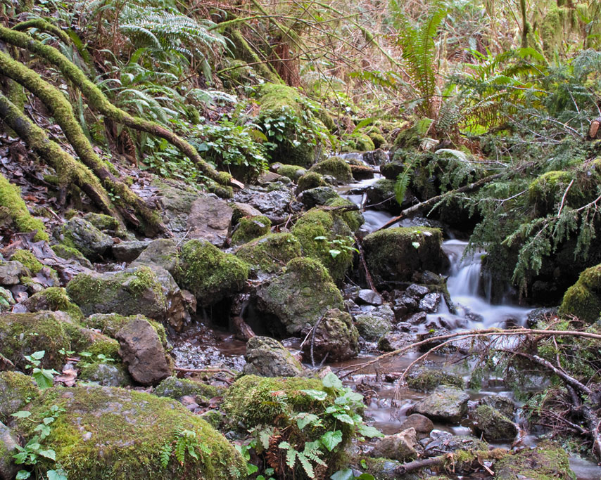 Humbug Mountain trail, Curry County, OR, Andrew D. Barron ©1/10/11