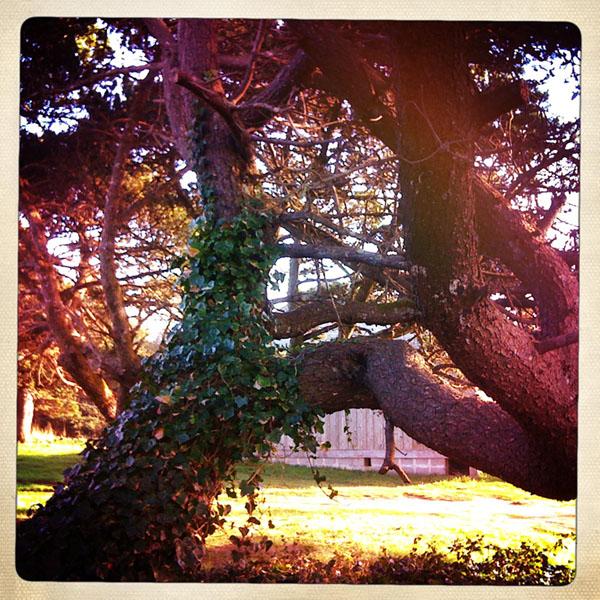 Nesika Beach tree, Curry County, OR, Andrew D. Barron ©1/30/11