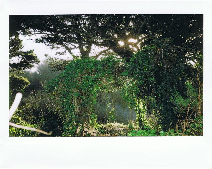 Nesika Beach trees, Curry County, OR, Andrew D. Barron ©1/26/11