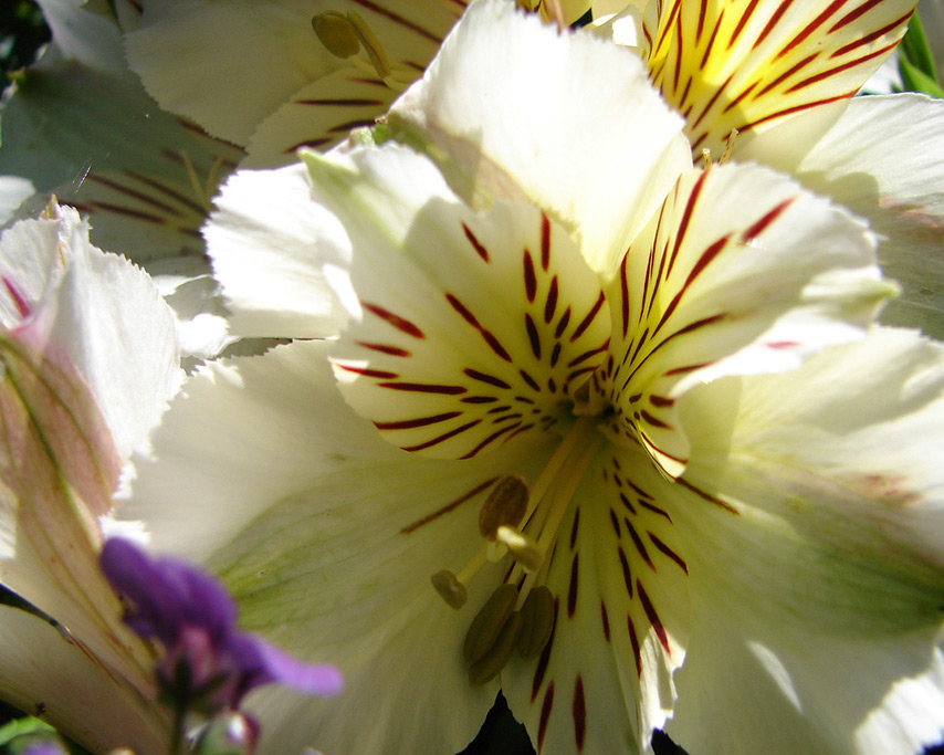 Flowers, Andrew D. Barron©8/9/11