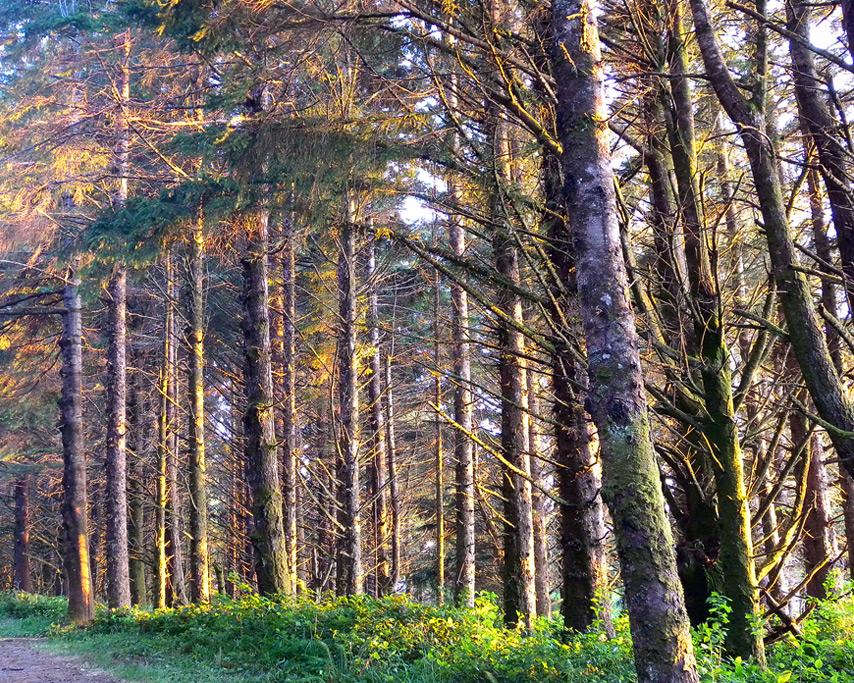 Otter Point sunlight in trees, Andrew D. Barron©8/2/11