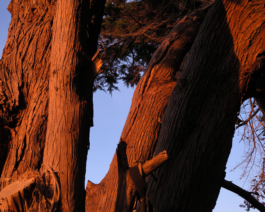 August sunset on old cypress trees, Andrew D. Barron©8/21/11