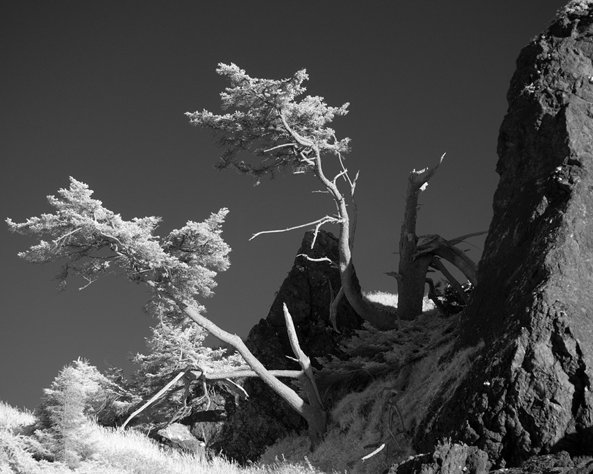 Trees at Sisters Rocks, Andrew D. Barron©8/17/11