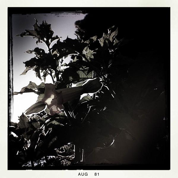Andrew D. Barron©8/6/11