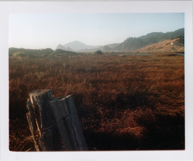 Euchre Creek marsh, Andrew D. Barron©8/11/11