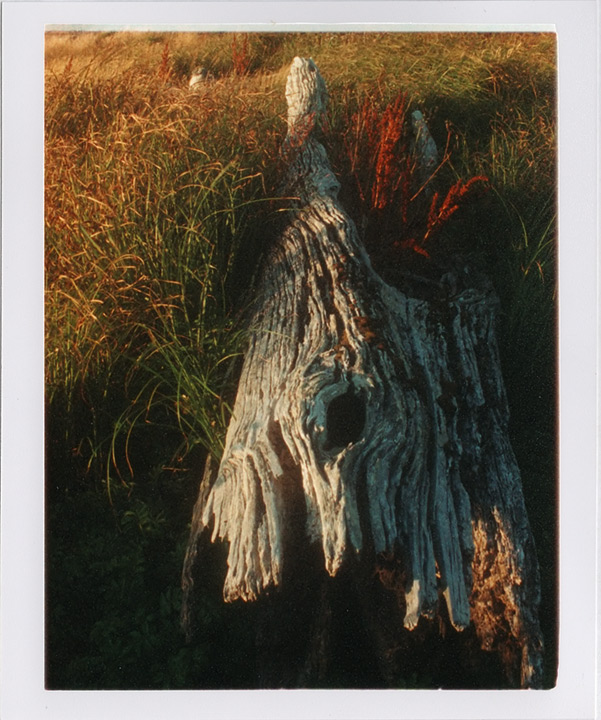 Old driftwood, Euchre creek marsh, Andrew D. Barron©8/11/11