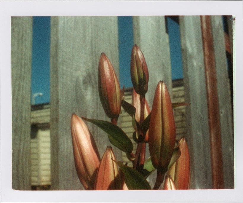 Flowers, Andrew D. Barron©8/17/11