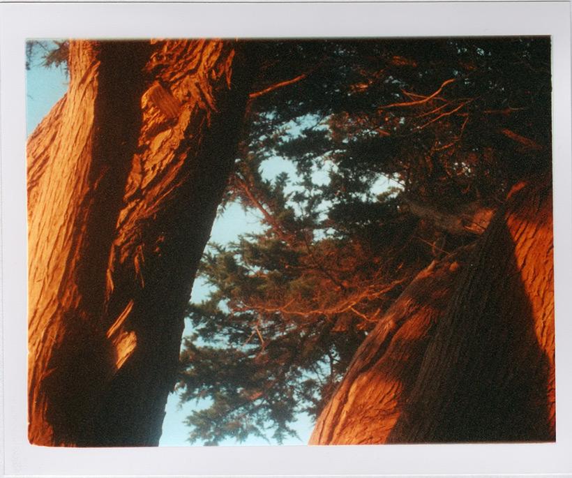 Golden sunset on Cypress, Andrew D. Barron©8/21/11