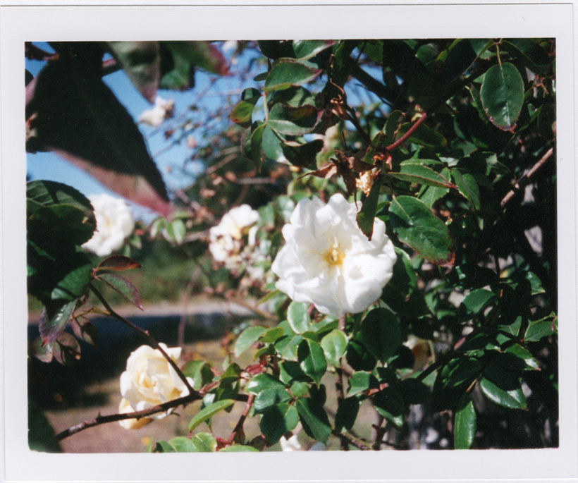 Flowers, Andrew D. Barron©8/11/11