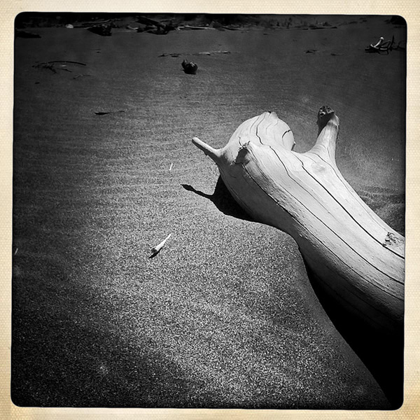 Driftwood on beach at Devil's Backbone, Andrew D. Barron©9/1/11
