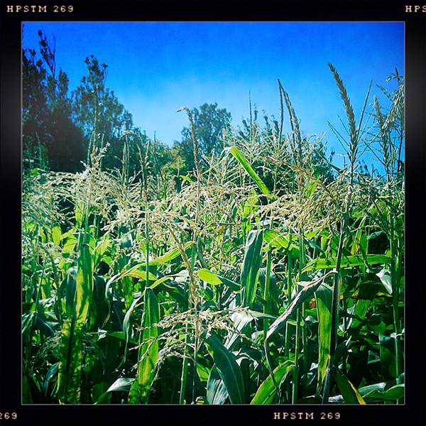Corn, Andrew D. Barron©9/18/11