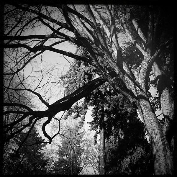 Lloyd center park, Andrew D. Barron©12/8/11