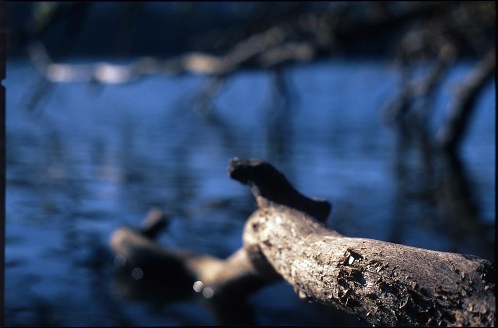 Fallen tree, Lacamas Lake, WA, Andrew D. Barron©12/5/11
