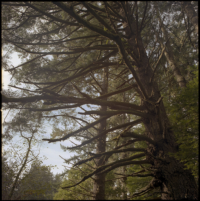 Forest on the 333 trail, Andrew D. Barron©12/26/11 [Hasselblad 500c/m, 80mm ƒ2.8, Portra 400]