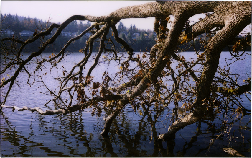 Lacamas lake with plastic-lensed instant film camera, Andrew D. Barron©12/5/11