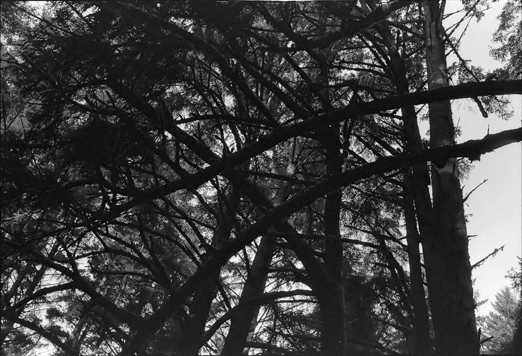 Trees along the 333 trail, Andrew D. Barron©12/22/12