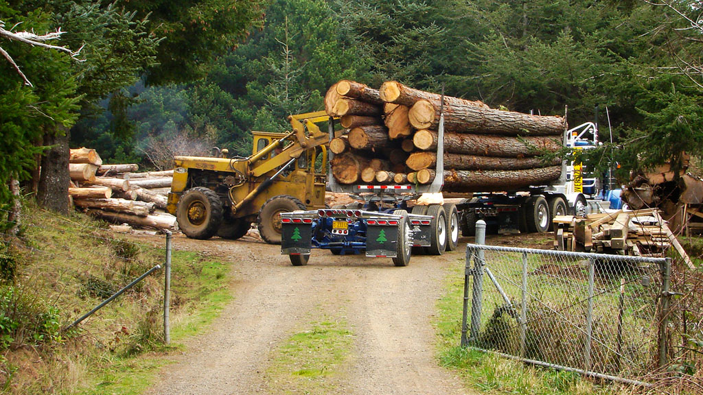 Mark Metcalf's Port Orford Cedar mill, Curry County, OR, Andrew D. Barron ©11/24/09