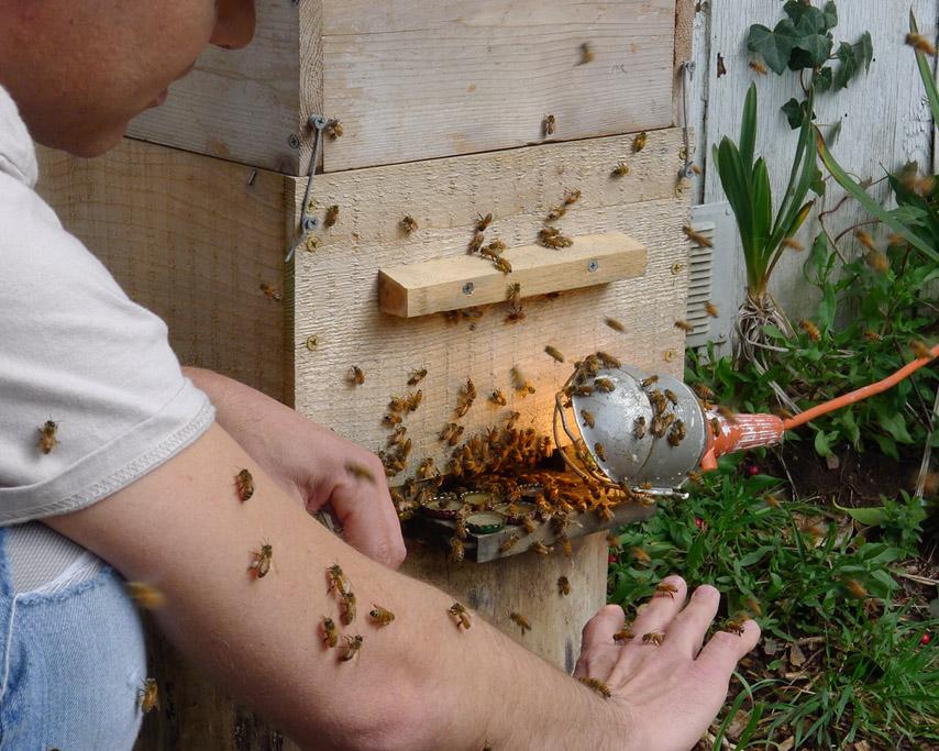 Bees, Andrew D. Barron ©3/14/11
