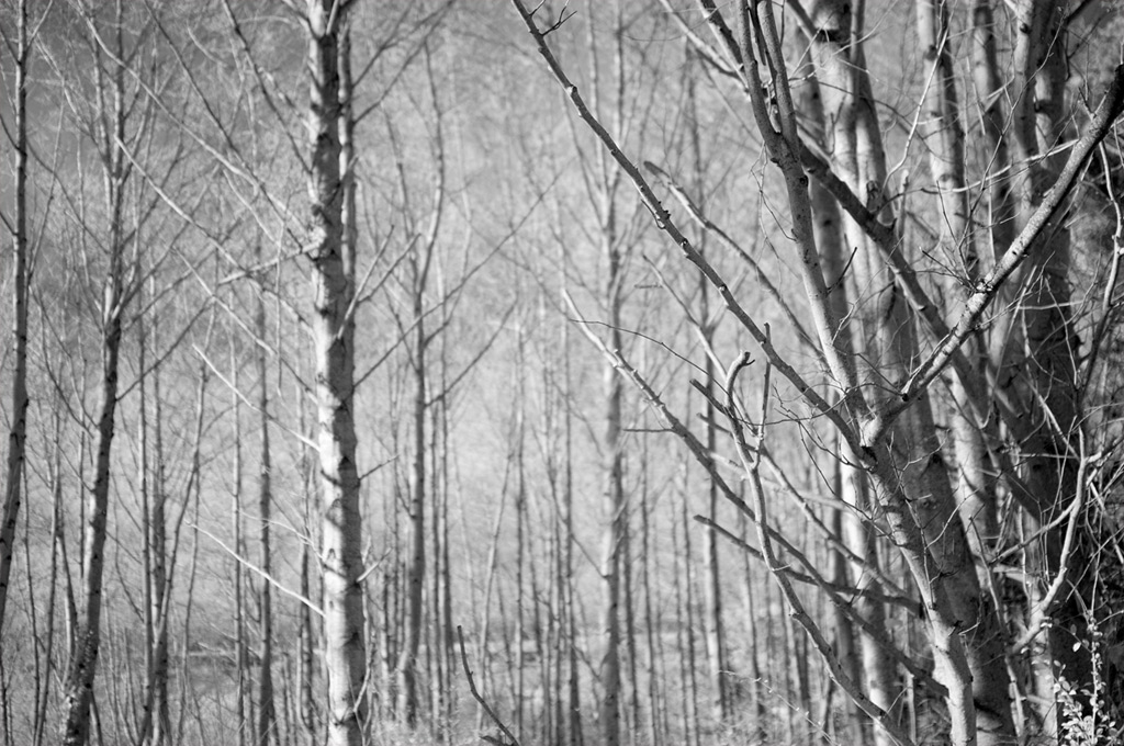 Trees, north end of Gold Beach, OR, Andrew D. Barron©1/1/12