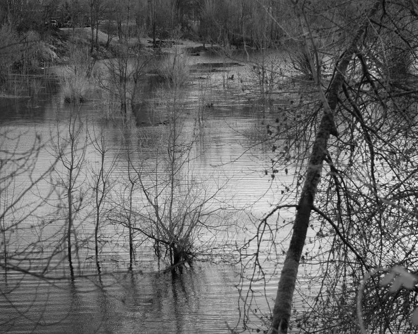Camas trees, Andrew D. Barron©1/21/12