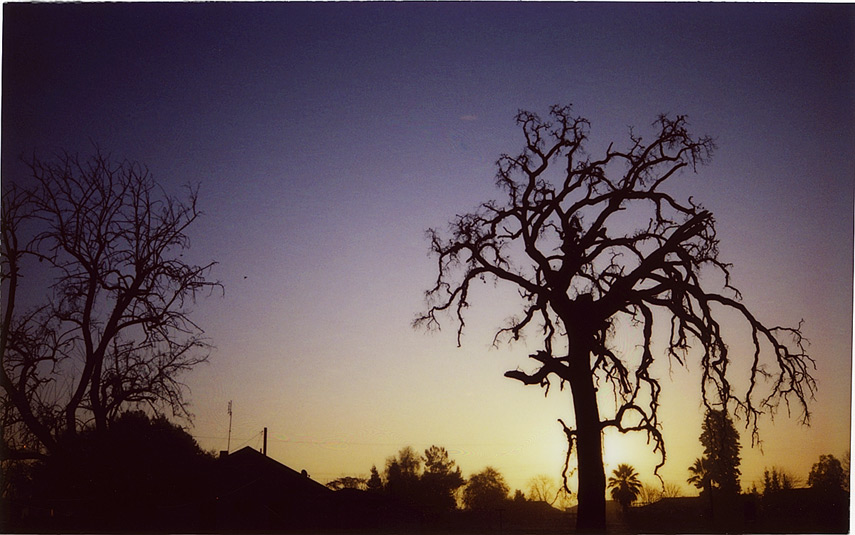 Old tree sunrise, Andrew D. Barron©1/10/12
