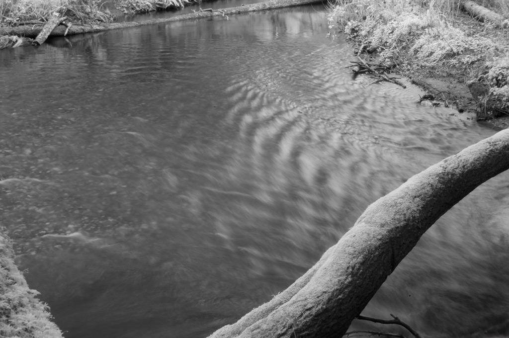 Log across Brush Creek, Humbug, Andrew D. Barron©2/9/12
