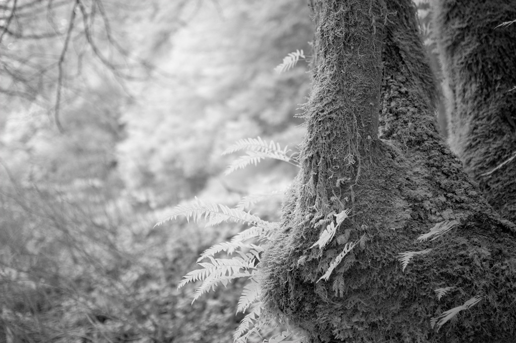Multiple trunk tree with ferns, Humbug, Andrew D. Barron©2/9/12