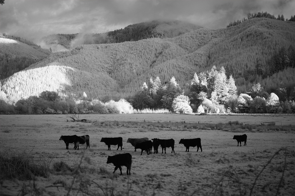 Euchre Creek valley, Andrew D. Barron©2/22/12