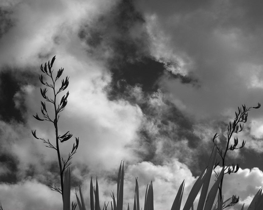 Plants, Harbor, OR, Andrew D. Barron©2/25/12