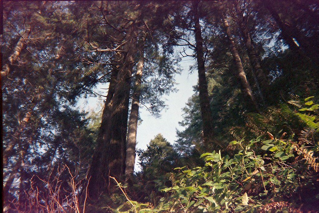 Headed up the Humbug trail with a disposable camera, Andrew D. Barron©2012