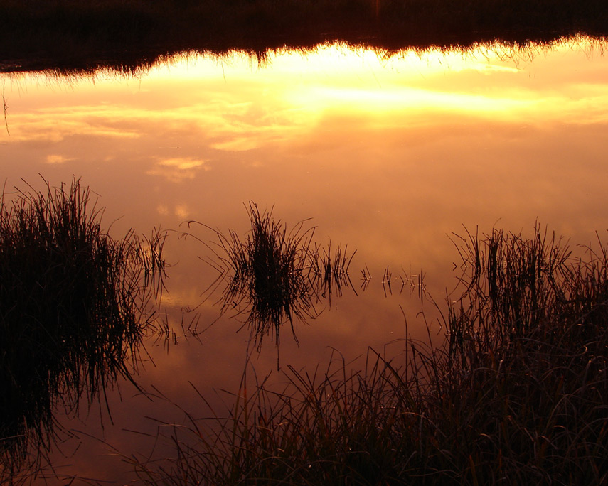 Sunset on the marsh, Andrew D. Barron©3/24/12