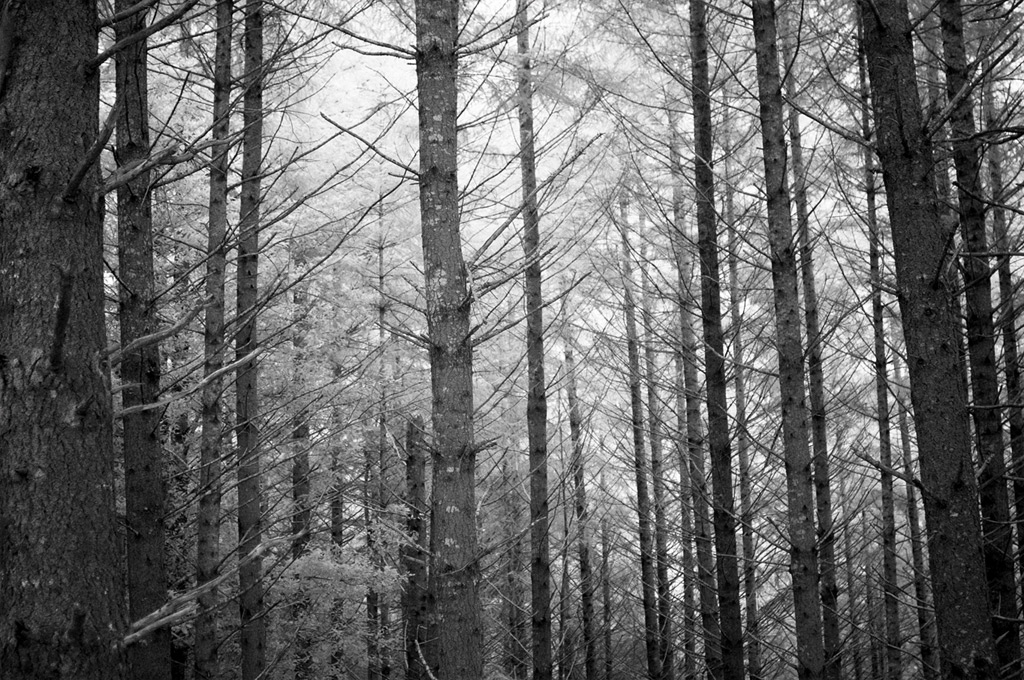 Trees near the Rogue, Andrew D. Barron©3/10/12