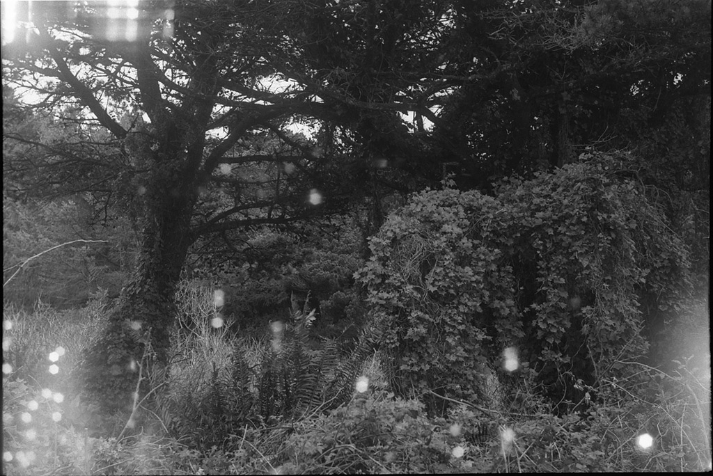 Backyard scene with shutter curtain light leaks, Andrew D. Barron©3/10/12