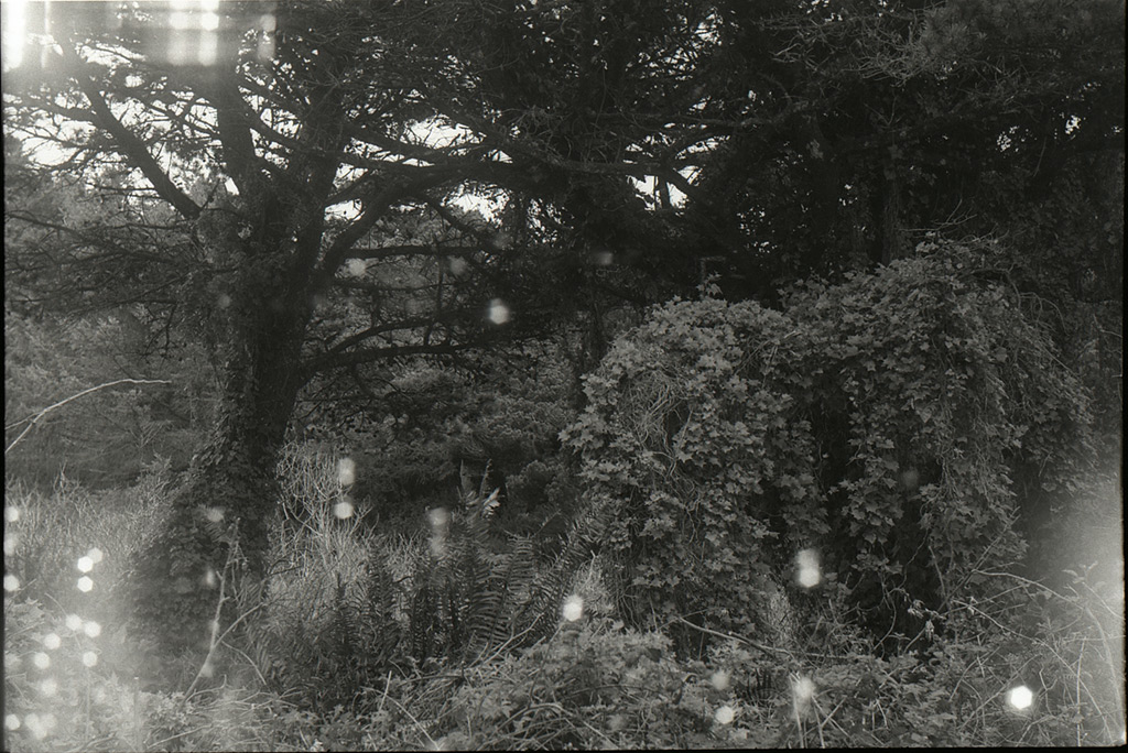 Backyard scene with shutter curtain light leaks, Andrew D. Barron©3/10/12