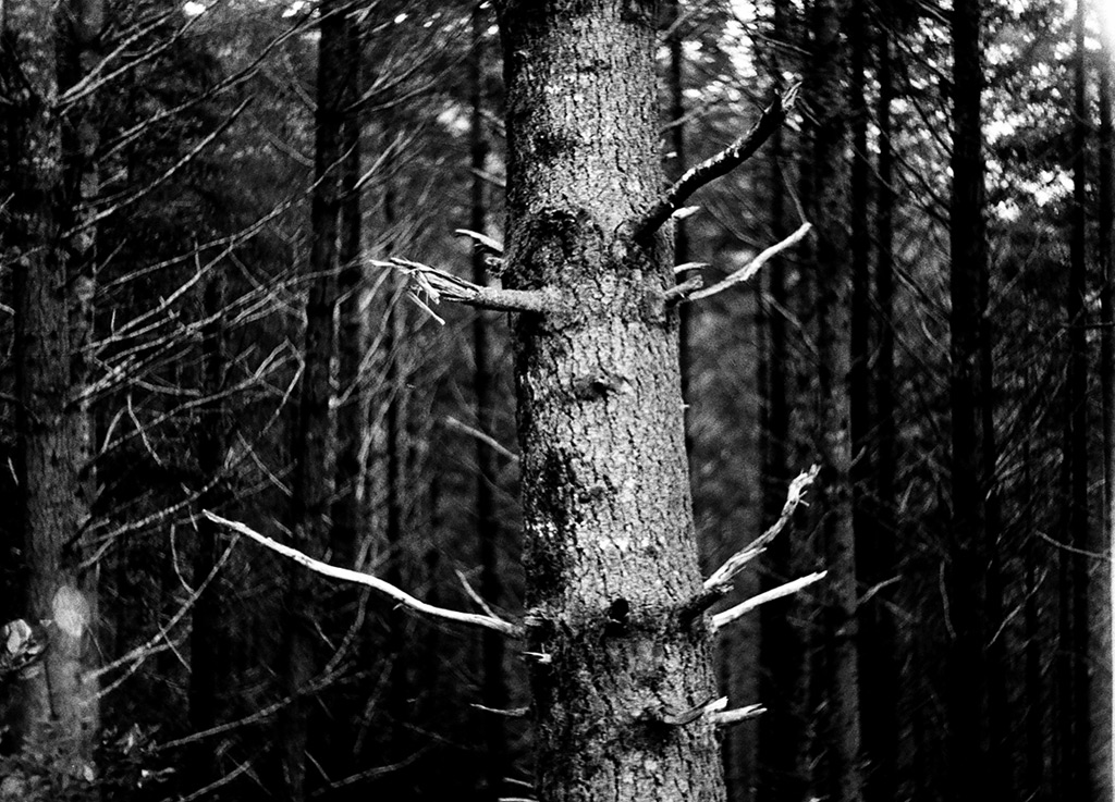 Trees up uses road 3313, Andrew D. Barron©3/10/12