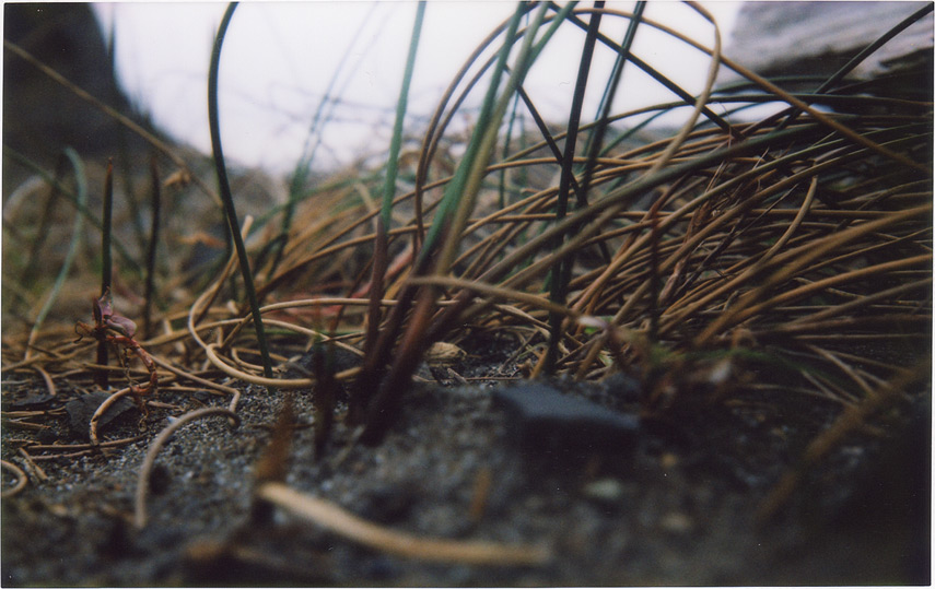 Humbug and beach grass, Andrew D. Barron©4/7/12