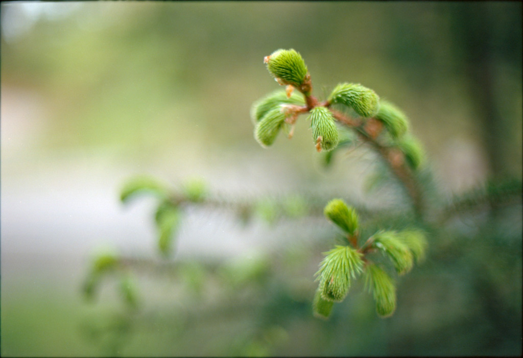 New growth, 333 trail, Andrew D. Barron©4/27/12