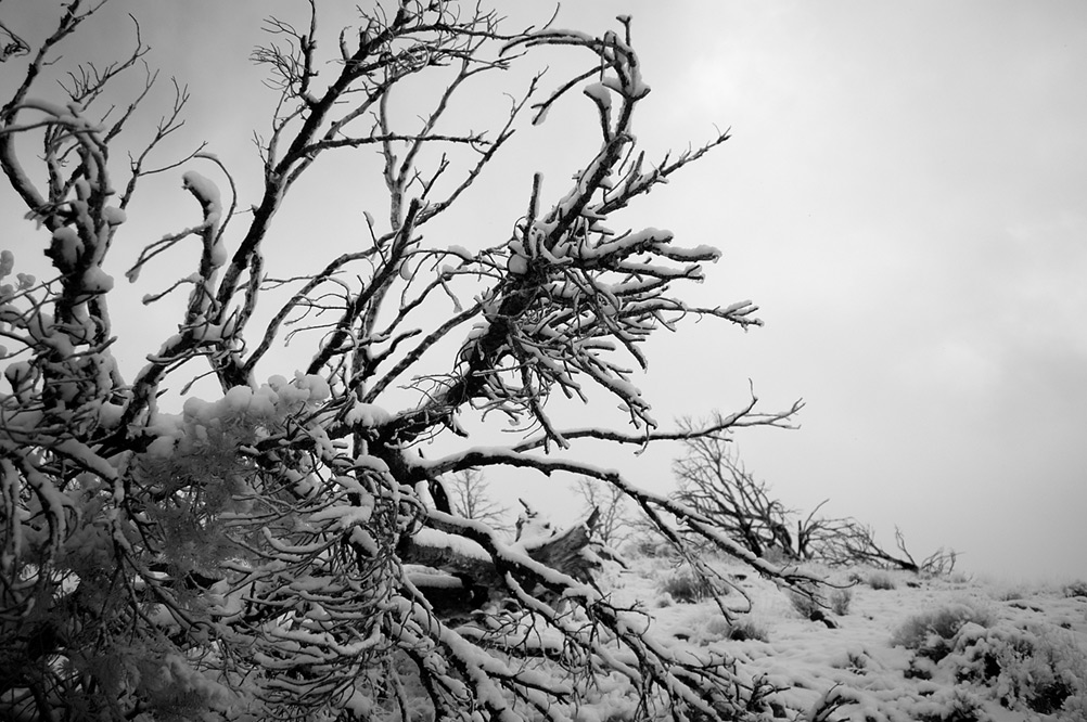 Snow day in South Reno, Andrew D. Barron©12/23/12 [Infrared converted D5000]