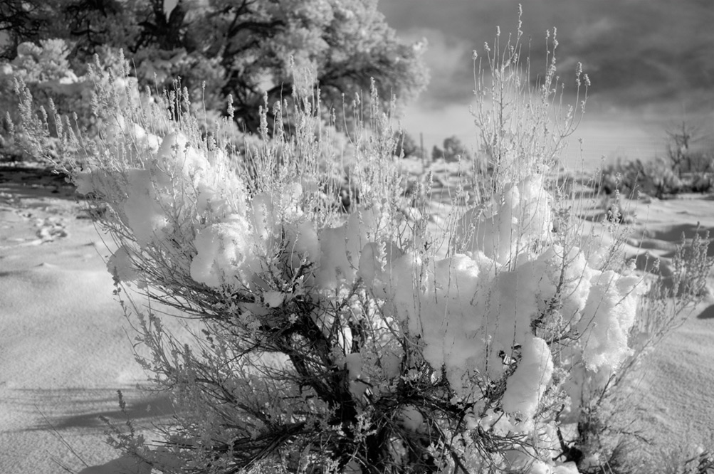 Day after, snow on sage, Andrew D. Barron©12/26/12 [Infrared converted D5000]