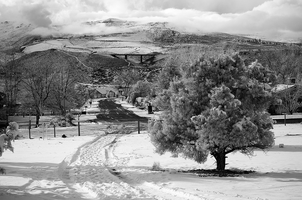 The driveway, Andrew D. Barron©12/26/12 [Infrared converted D5000]