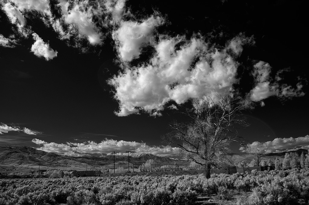 Substation tree, Carson City, NV, Andrew D. Barron©4/24/13 [infrared converted d5000]