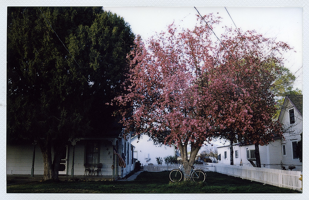 Bicycle and blooming tree, Gardnerville NV, Andrew D. Barron©4/13/13 [Fuji Instax 210]
