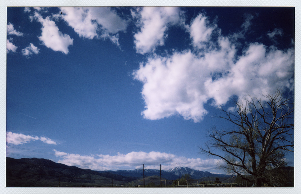 Substation tree, Carson City, NV, Andrew D. Barron©4/24/13 [Fuji Instax 210]