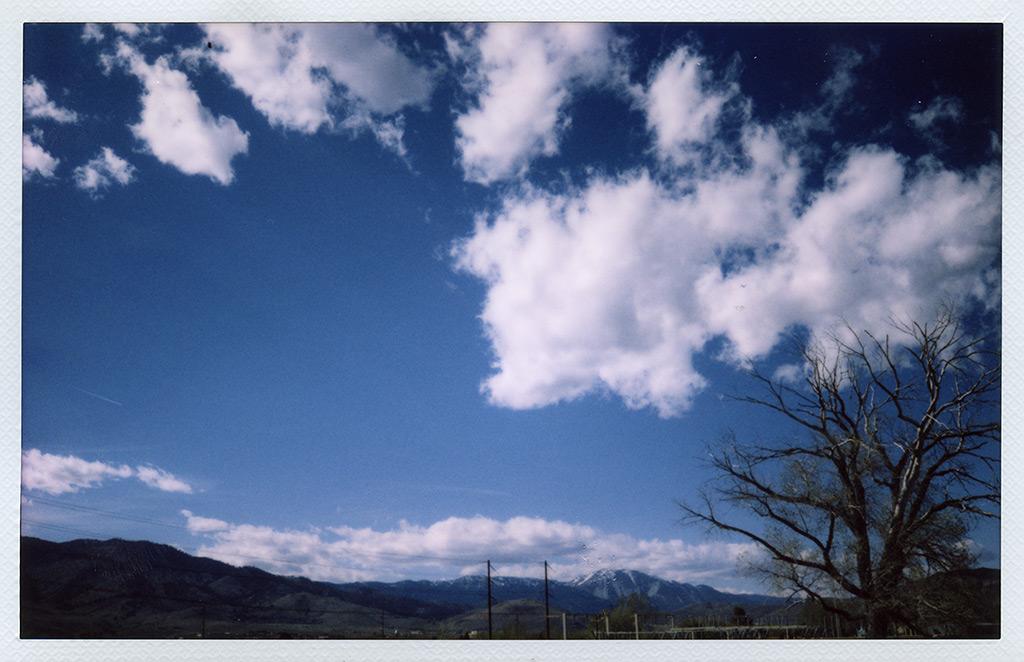 Substation tree, Carson City, NV, Andrew D. Barron©4/24/13 [Fuji Instax 210]