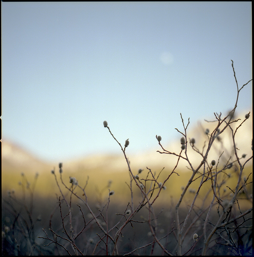 Tenaya Lake Moonrise, Andrew D. Barron©5/29/13 [Hasselbad 500c/m, Zeiss 80mm ƒ2.8, Portra 400]