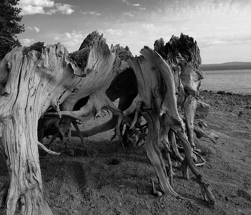 Almanor shore stump, Andrew D. Barron©7/26/13 [iPhone 4S:645 Pro]